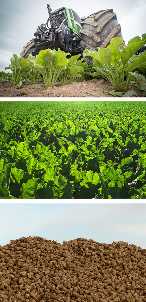 Innovative uses for sugar beet biomass